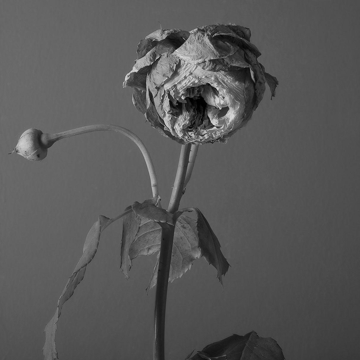 דויד סקורי - צילום ורד