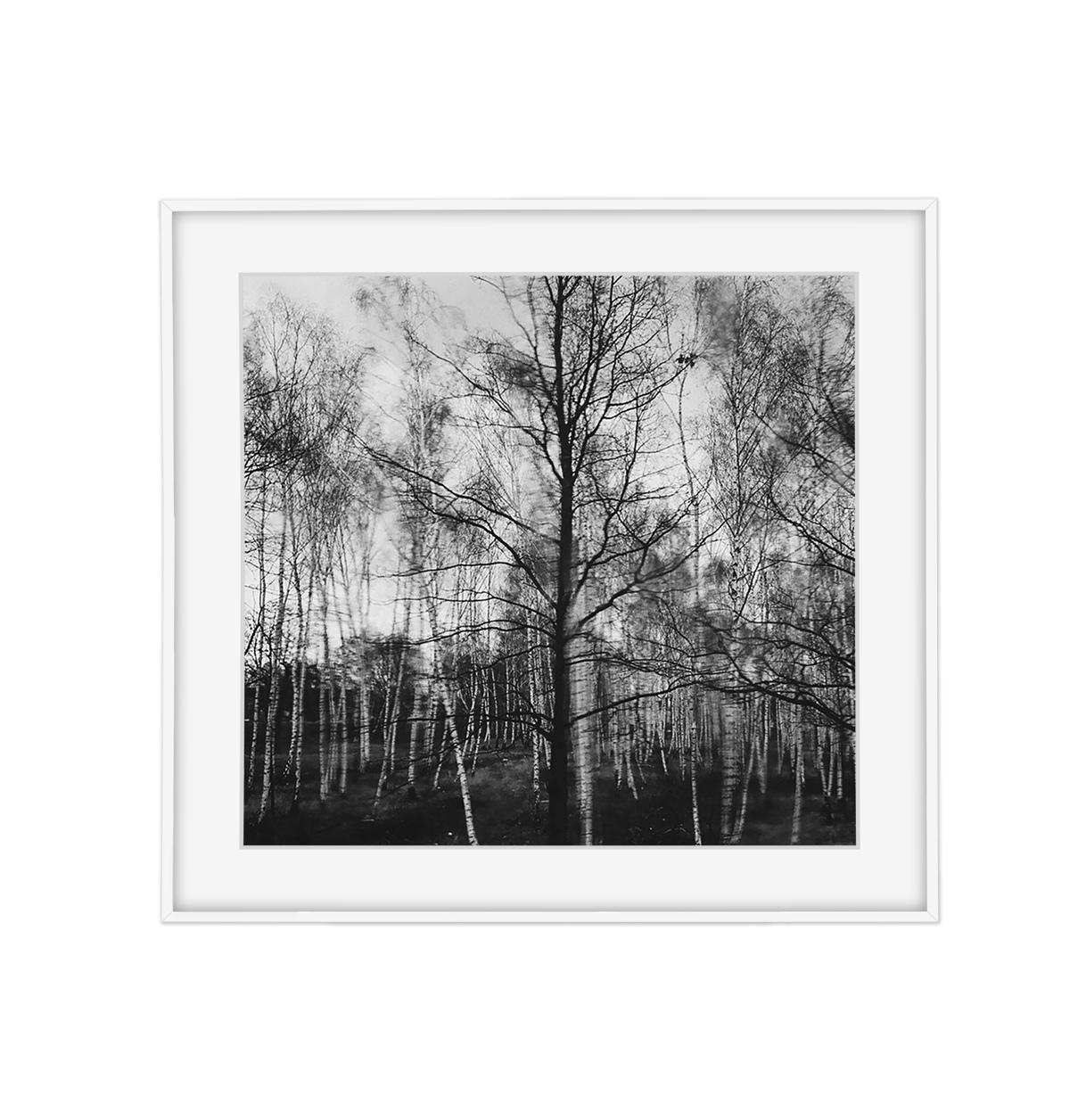 הדפס ומסגור - עצים נודדים